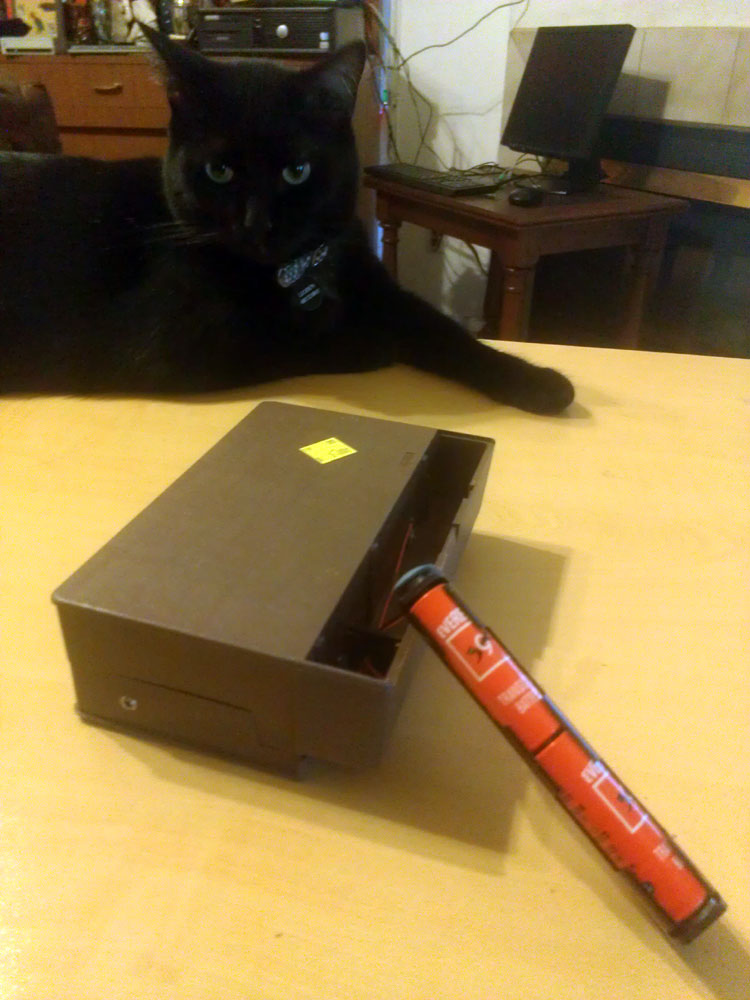 Leoben the Cat inspects my latest thrift store find.