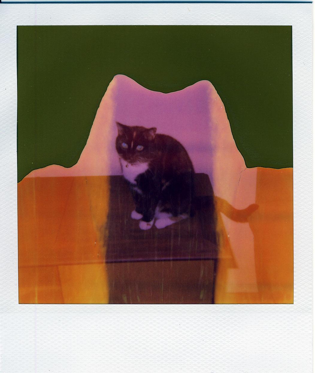 Number 6, Tortoiseshell Cat
